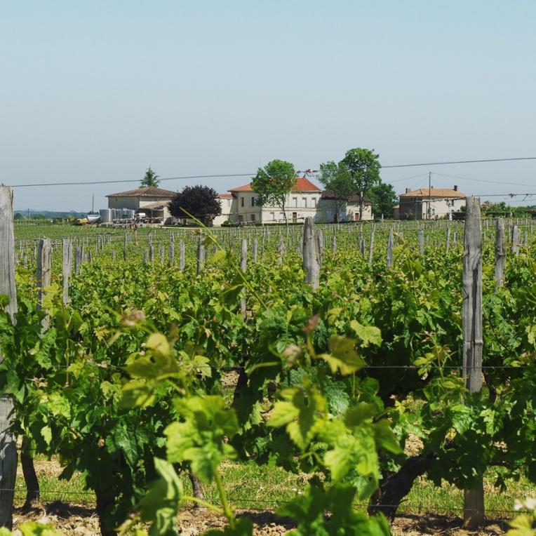 Le domaine vu des vignes