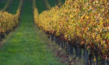 Vignes-Octobre-2017-2