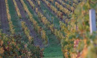Vignes-Octobre-2017